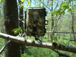 How Wireless Trail Cameras Work